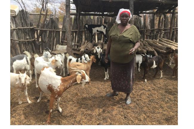 goat breeding project has improved goat offspring for women in Binga District in Zimbabwe